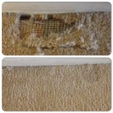 House Cleaning Carpet Cleaners Rugs Air Ducts Hardwood